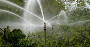 Chọn thời điểm tưới nước thích hợp cho cây cà phê