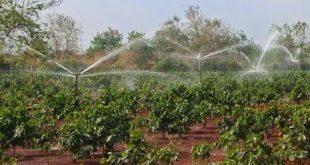 Ưu nhược điểm tưới nước phun mưa cây cà phê